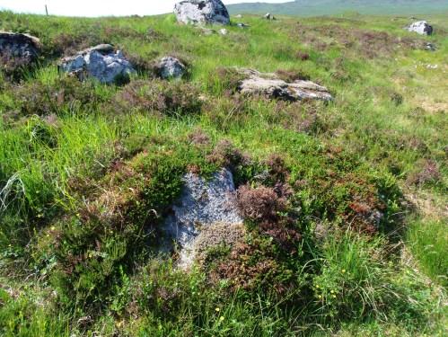 Rocks And Flora On Rannoch Moor