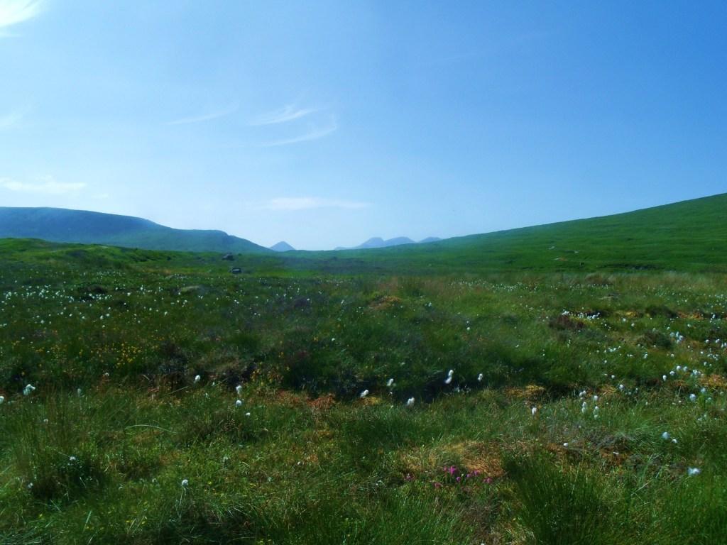 Bog Cotton On Rannoch Moor GEDSC DIGITAL CAMERA