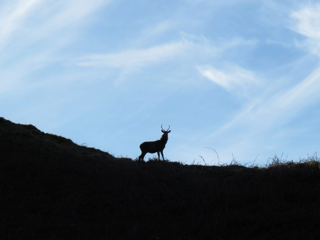 Stag in sillhouette on Jura