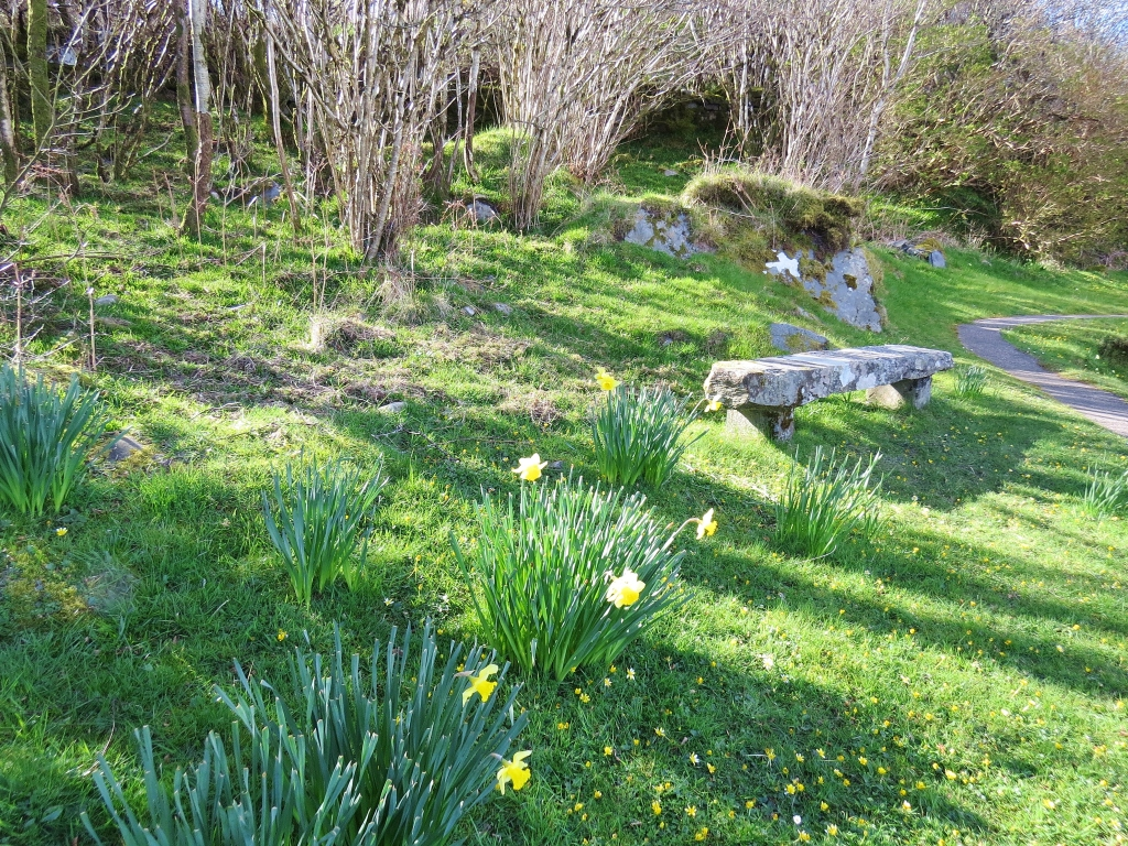 Stone bench and daffodils