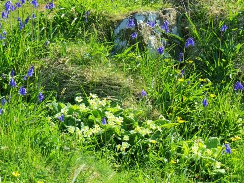 Lunga wildflowers