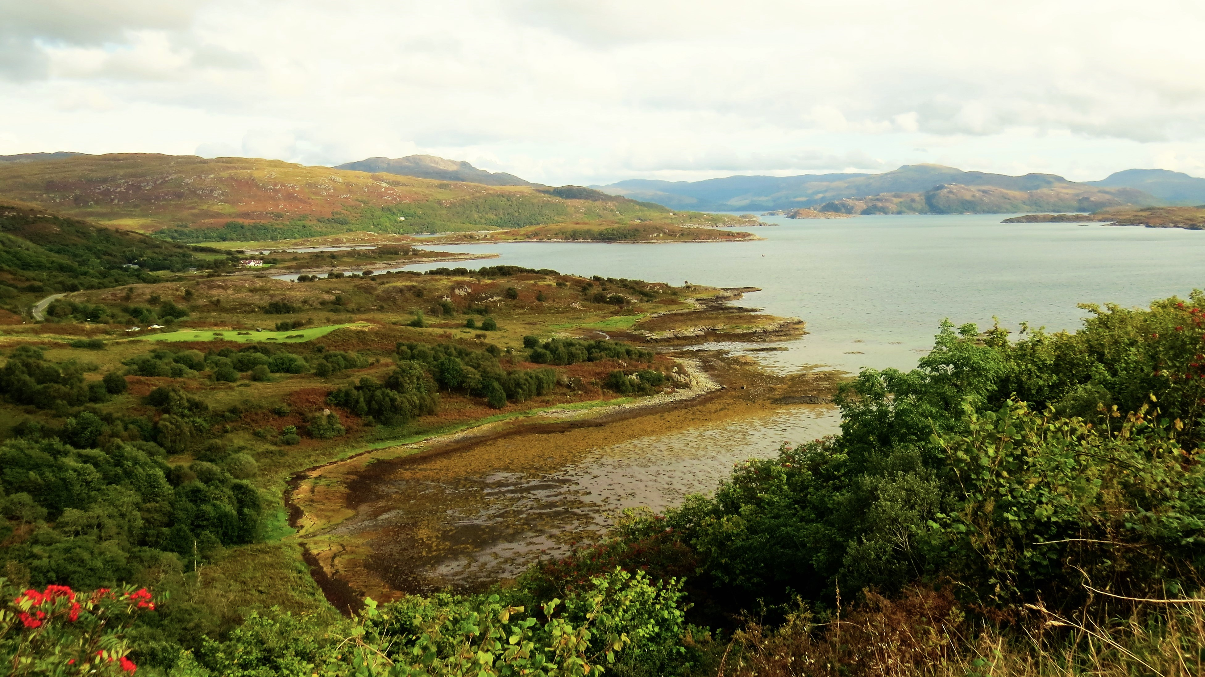 at-the-edge-of-the-rain-forrest-ardnamurchan
